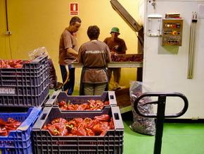 servicios destiladera. Centro Especial de Empleo. breña Alta, isla de La Palma, canarias